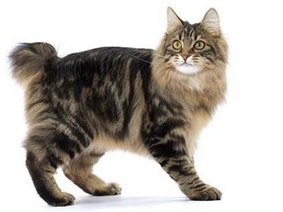 Le stress du chaton chez le vétérinaire