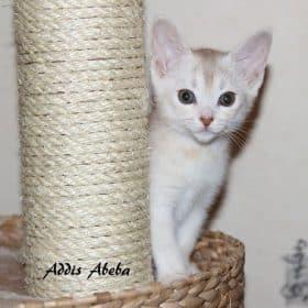 D'ADDIS ABEBA