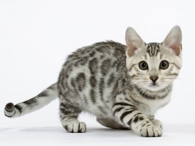 Les avantages de la stérilisation du chaton