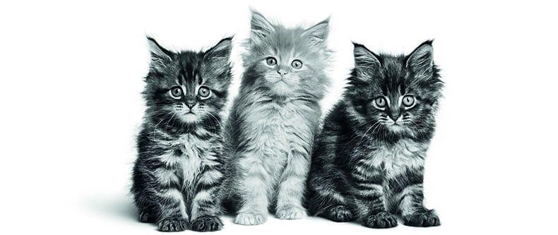 Les bonnes pratiques à connaître avant d'adopter un chaton ou un chat