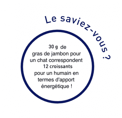 Les équivalences énergétiques