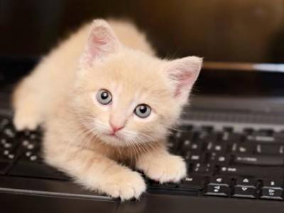Les erreurs d'éducation du chaton