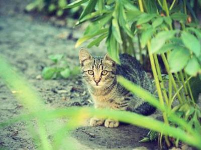 Les plantes toxiques pour le chat : éviter les accidents