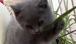 Les plantes toxiques pour le chaton