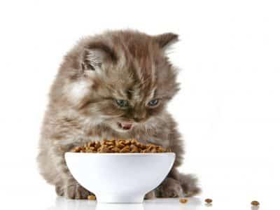 Les repas du chaton
