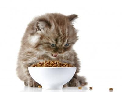 Quel distributeur de nourriture choisir pour mon chat ?
