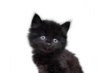 Limiter le stress du chaton à son arrivée