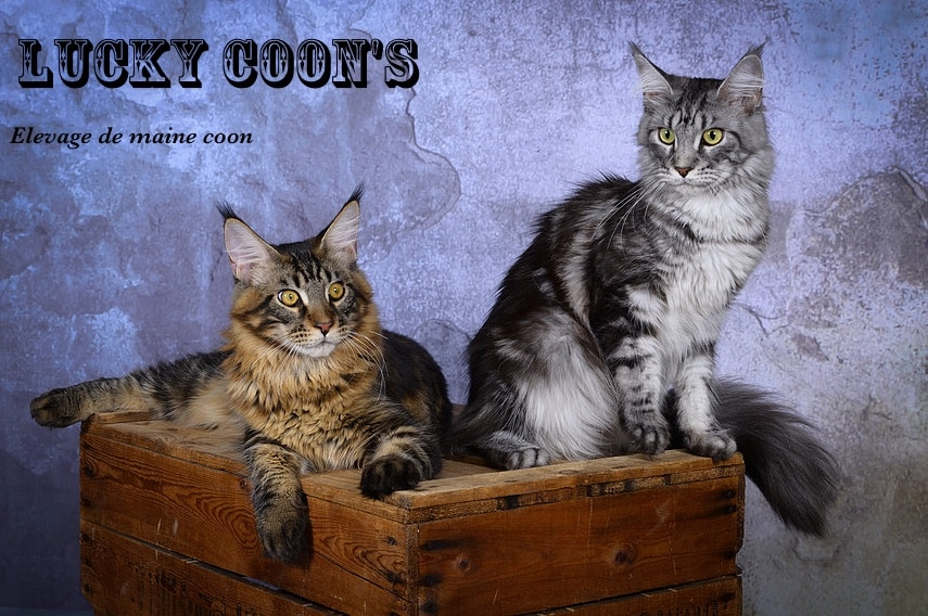 LUCKY COON'S