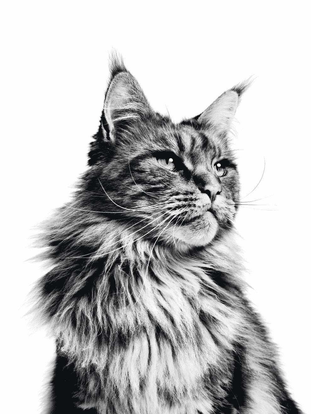 Le rapport des Français à la possession responsable et au bien-être du chat