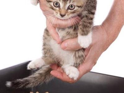 Marquage et malpropreté chez le chat