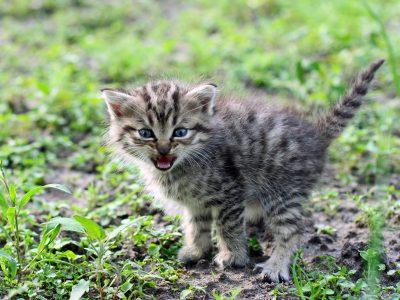 Mon chat est agressif envers moi ou les personnes de l'entourage : que faire ?