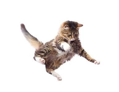 Les acrobaties du chaton