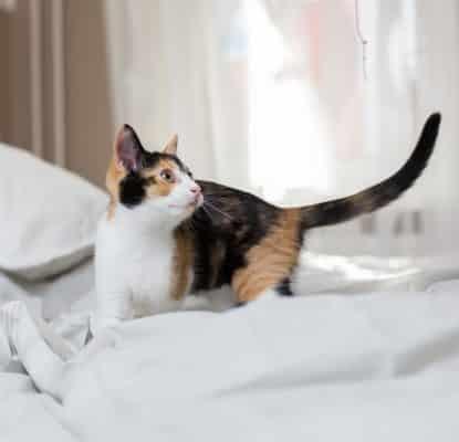 Mon chat fait des bêtises : comment lui apprendre les bonnes manières ?
