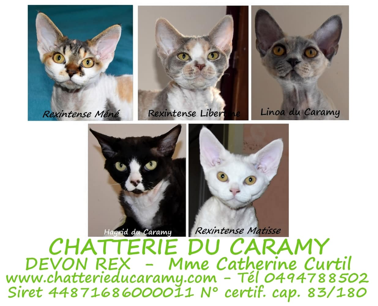 CHATTERIE DU CARAMY