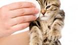 Nettoyer les yeux d'un chat