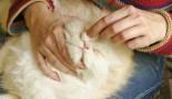 Nettoyer les yeux du chaton