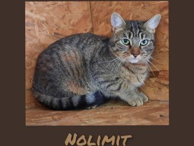No limit 09f86222-ed7b-487b-a36a-5f8d77af777a