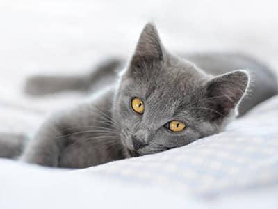 L'alimentation du chaton: les idées reçues