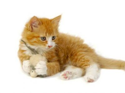 Permettre au chaton de jouer seul