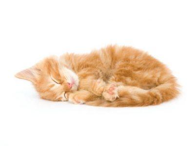 Première nuit du chaton