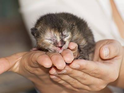 Prendre soin d'un chaton nouveau-né