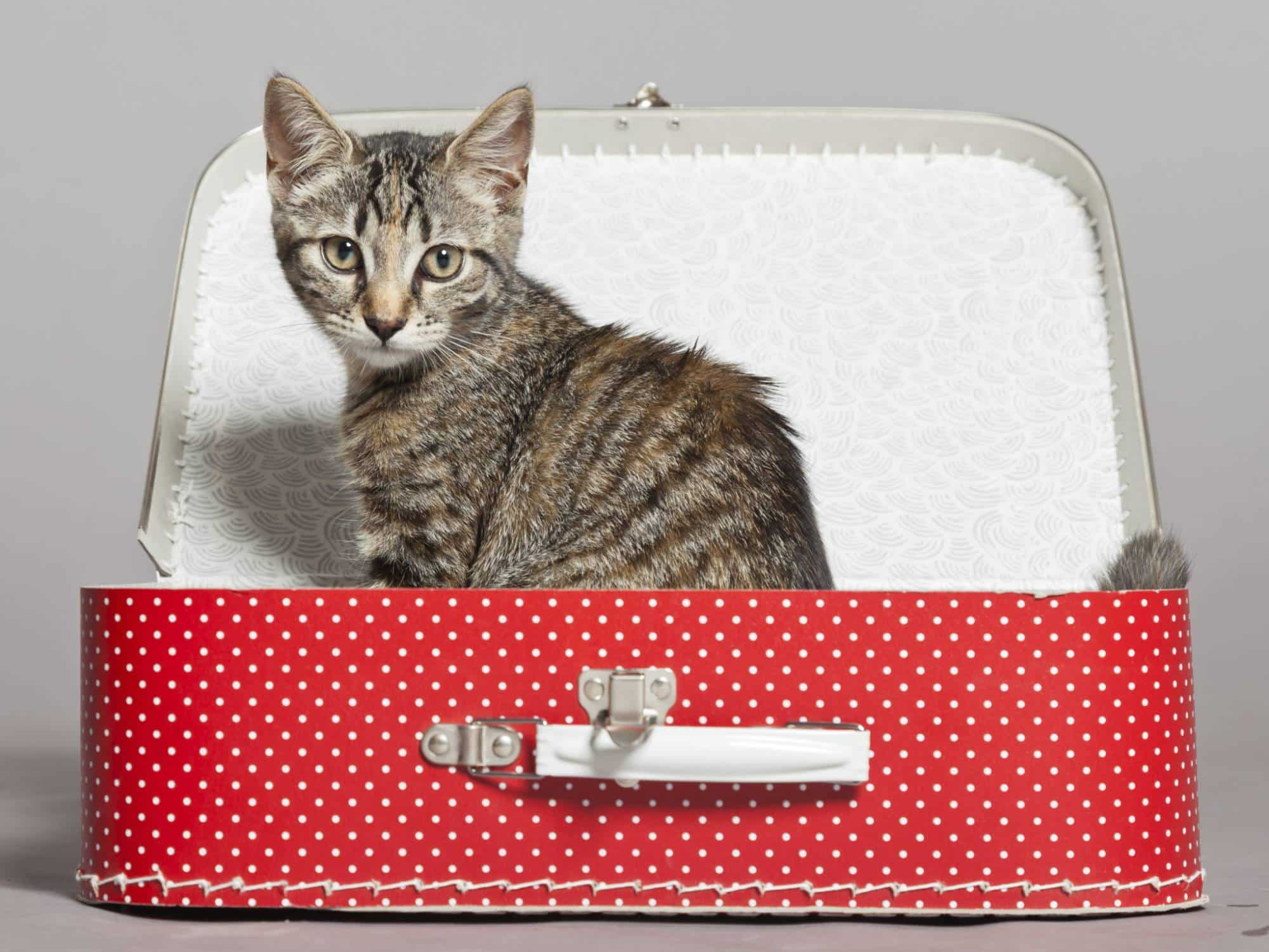 Préparer un voyage avec son chat