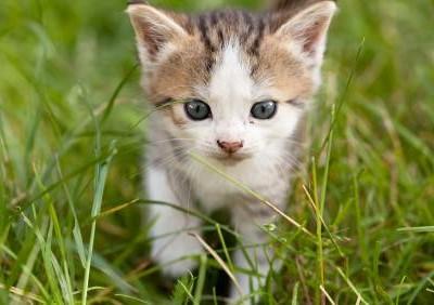 Puces, tiques et parasites du chaton