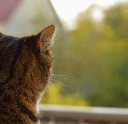 Comment protéger mon chat s'il va sur le balcon ?