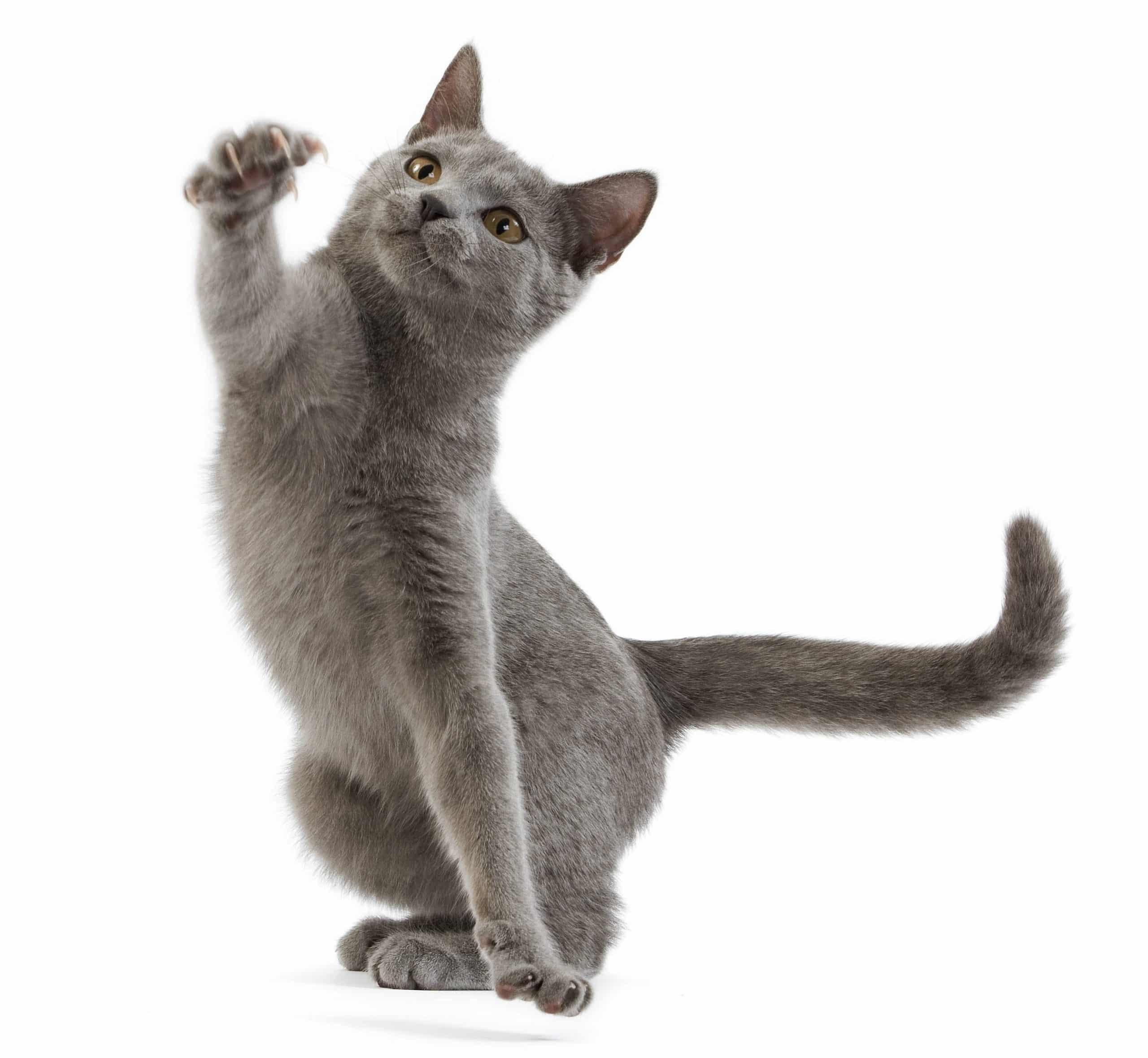 Quand et à quoi jouer avec mon chaton ?