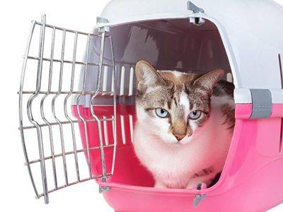 Emporter son chaton en voyage