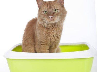 Quelques conseils à propos du bac à litière du chat