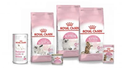 Packshot Kitten ROYAL CANIN