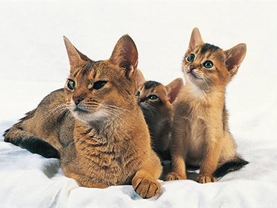 Réussir le sevrage des chatons