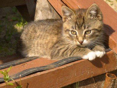 Sécuriser l'environnement du chaton