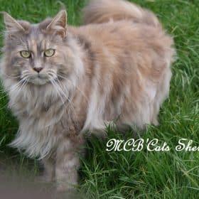 MCB'CATS