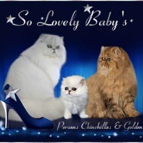 SO LOVELY BABY'S