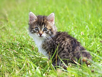 Sommeil, jeu, chasse... Une journée dans la vie d'un chat.