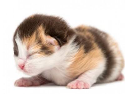 La digestion et le système digestif du chaton