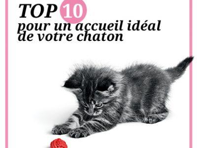 Top 10 pour un accueil idéal de votre chaton !