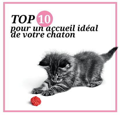 https://www.wikichat.fr/wp-content/uploads/sites/2/top-10-conseils-accueil-chaton-article.jpg