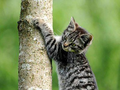 Les griffes du chaton