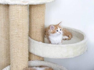 L'utilité d'un arbre à chat pour le chaton