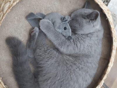 Dix conseils pour transporter votre chat vers notre clinique dans les meilleures conditions