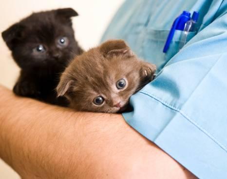 La première visite du chaton chez le vétérinaire