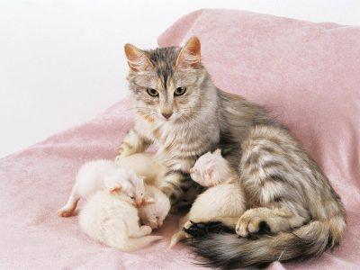 La défense du chaton contre les maladies